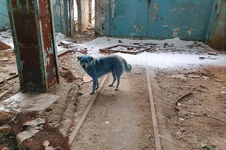 Спецбригада отловит синих собак в Дзержинске 13 февраля