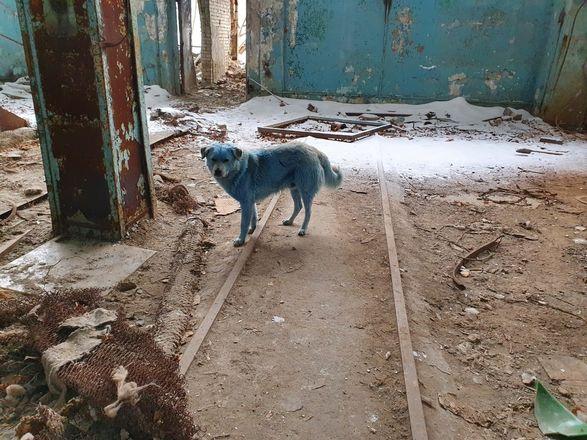 Чудеса уходящей зимы в Нижегородской области - фото 17