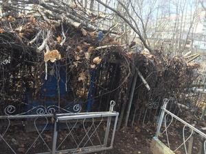 На кладбище «Марьина роща» могилы завалили спиленными ветками