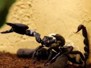 В нижегородском зоопарке скорпионы впервые дали потомство (ФОТО)