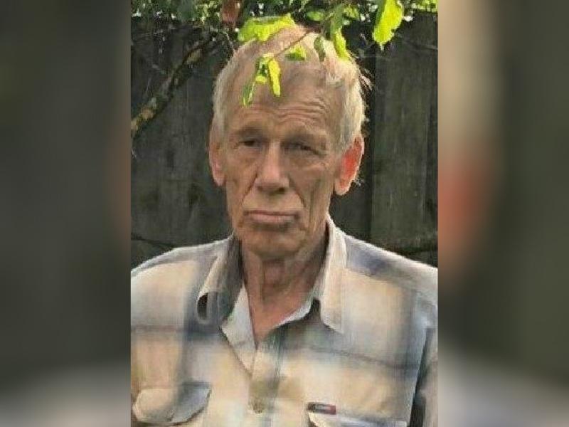 Пенсионер пропал в лесу в Павловском районе - фото 1