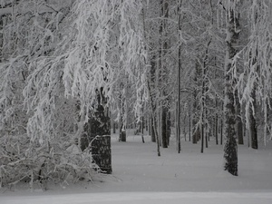 Экстремальных перепадов температур предстоящей зимой не ожидается