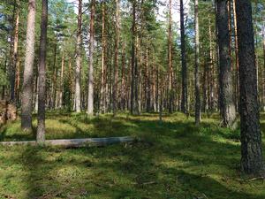 Нижегородец заплатил почти 200 тысяч за незаконную вырубку леса