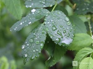Похолодание до +13°С и дожди принесет нижегородцам наступившая неделя