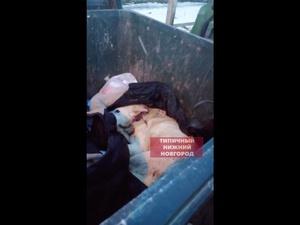 Полиция проводит проверку из-за полуживой собаки, найденной в мусорке в Ленинском районе