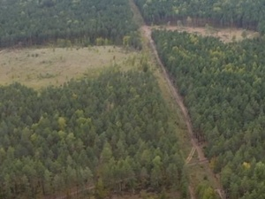 Никиту Михалкова обвиняют в вырубке павловских лесов