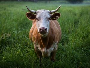 Аграриям помогли создать 17 животноводческих комплексов в Нижегородской области в 2019 году