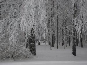 Снегопады в Нижнем Новгороде продолжатся до конца марта