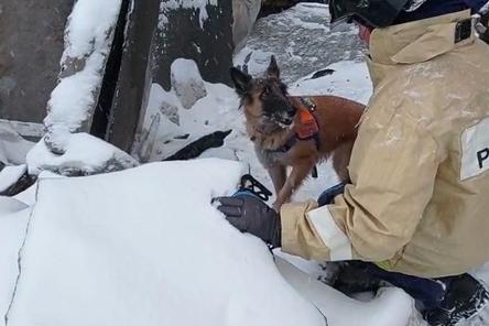 Кинологи с собаками ищут пострадавших на месте взрыва на Мещере