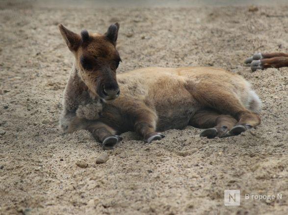 Выжить в пандемию: что происходило в закрытом зоопарке «Лимпопо» - фото 44