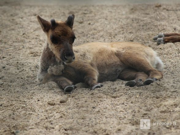 Выжить в пандемию: что происходило в закрытом зоопарке «Лимпопо» - фото 8